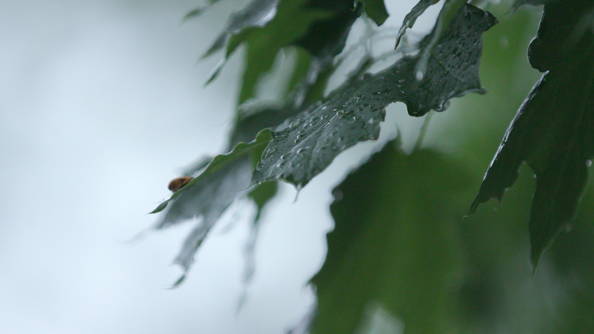 On this picture you can see a bug resting on a leaf during rain in Indianapolis.