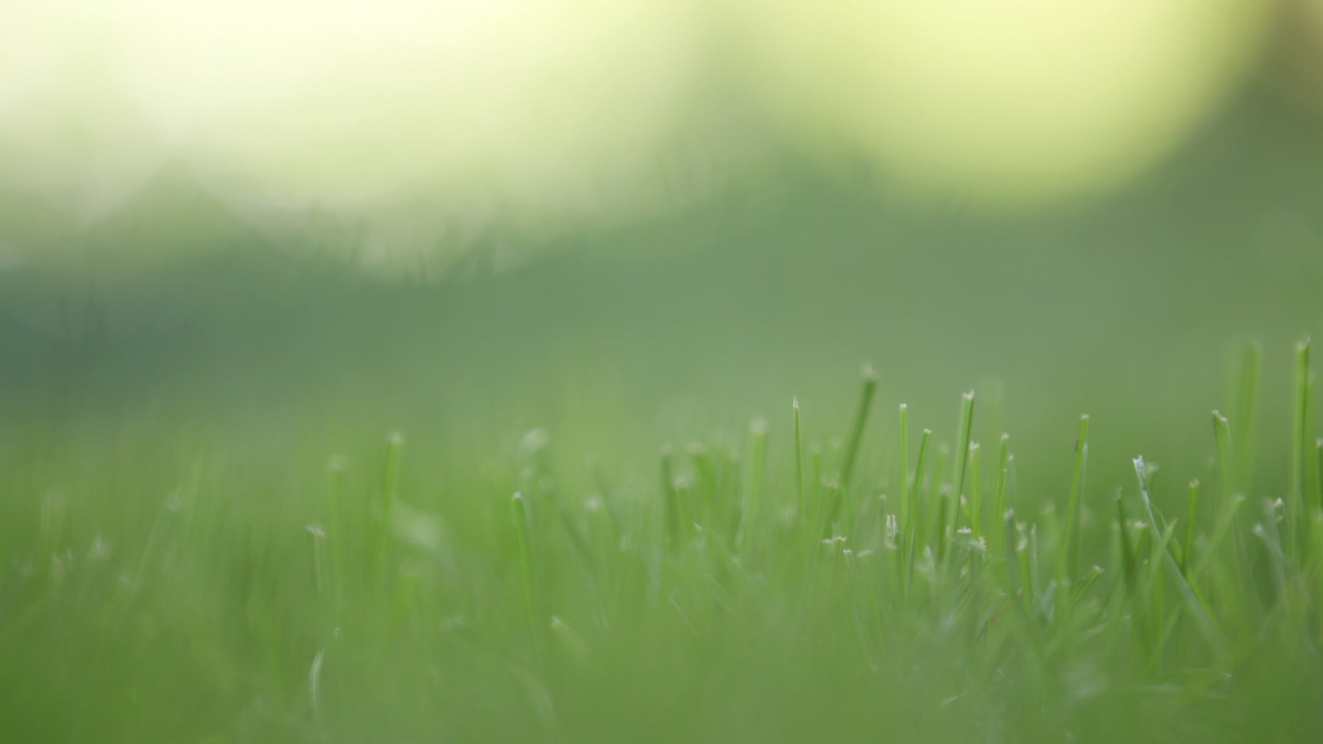 On this picture you can see dew collecting on grass.